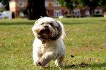 bawiący się pies na terenie niewidzialnego ogrodzenia dla psa