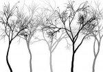 Fototapeta na wymiar, drzewa